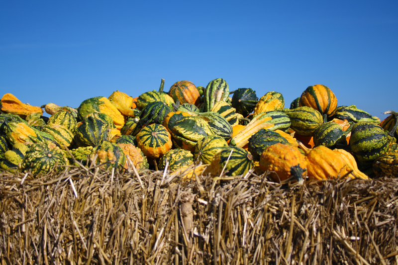 Fall gourds on top of a bale of hay